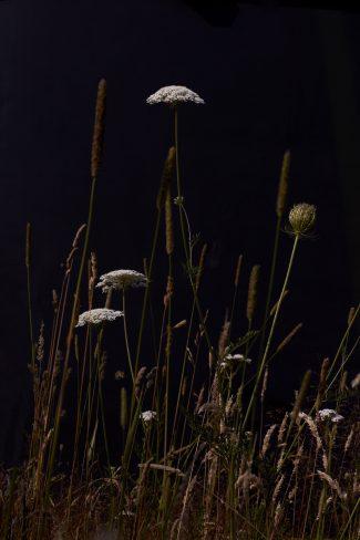 Meadow three