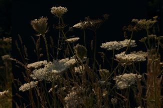 Meadow one